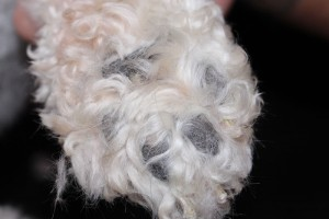 Paw Pads Before